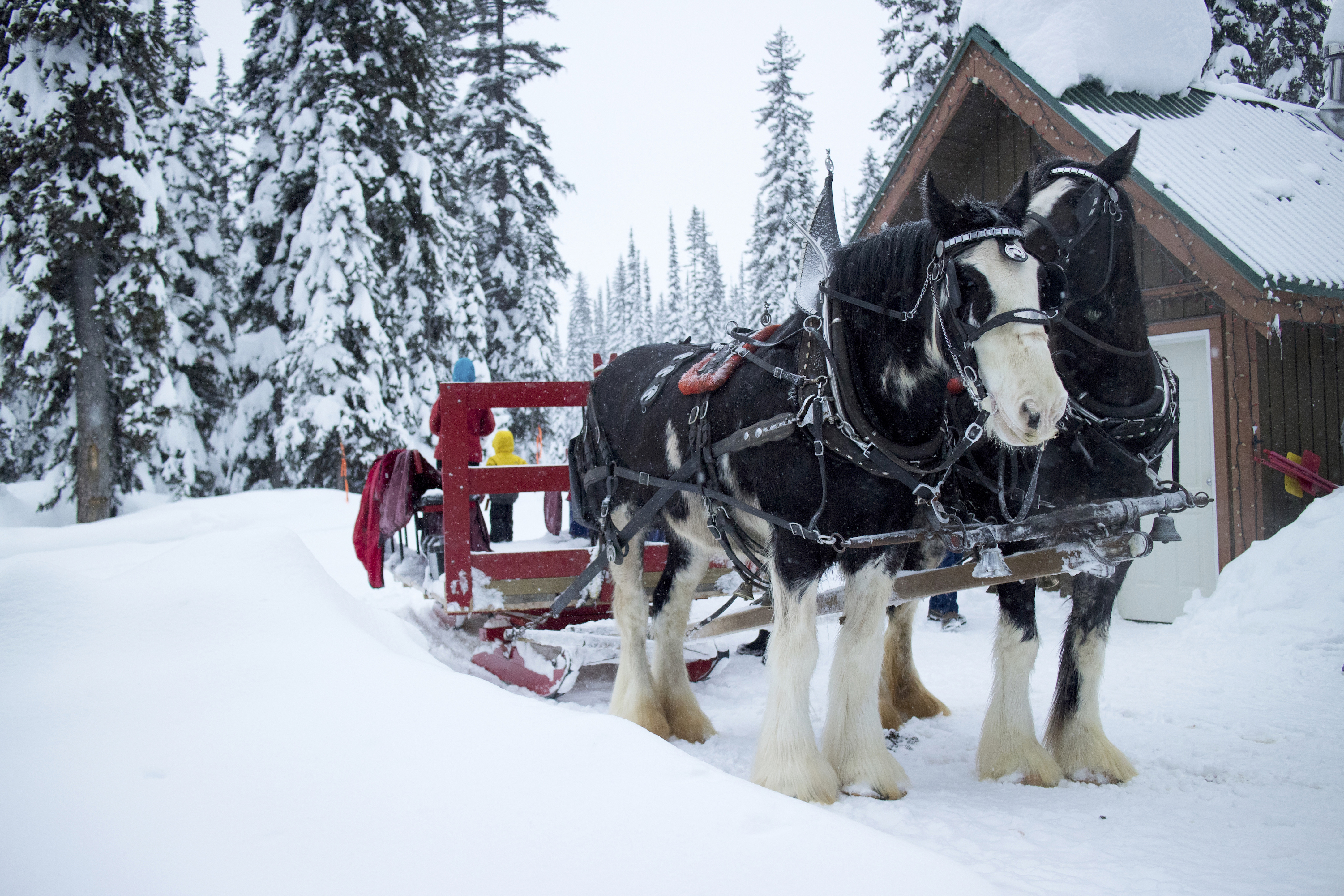 Sleigh day