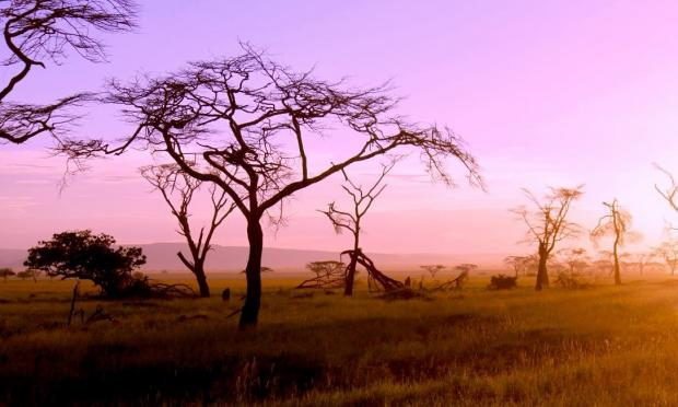 Serengeti sunsets
